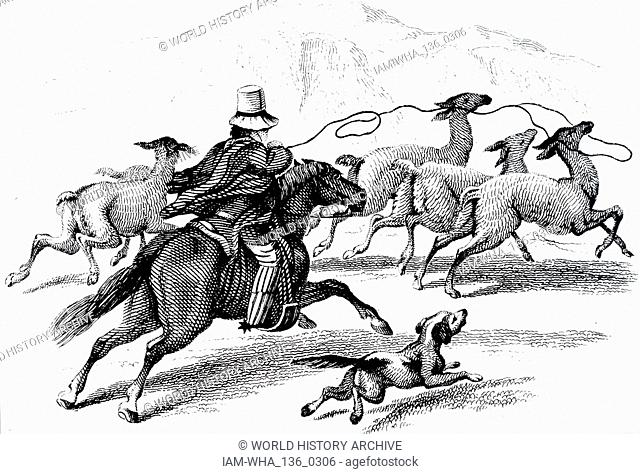 An engraving depicting the hunting of a llama with the use of a lasso. Dated 19th century
