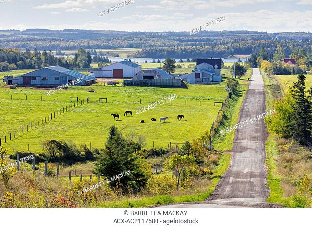 Horses grazing in pasture, Burlington, Prince Edward Island, Canada