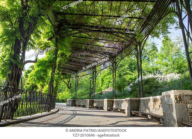 Wisteria Pergola in Central Park, NY, USA