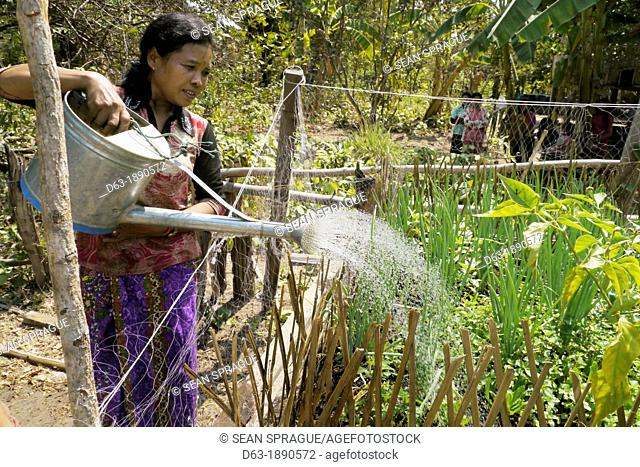 CAMBODIA. Projects of DPA in Stung Treng, supported by SCIAF. Phluck village  Woman watering her garden