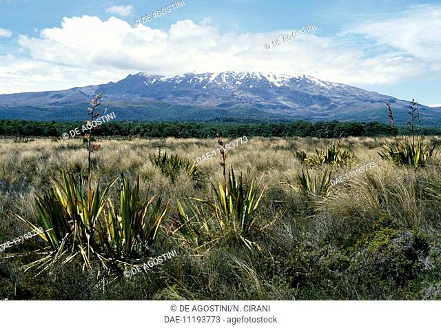 Vegetation with Mount Ruapehu (active volcano) in the background, New Zealand