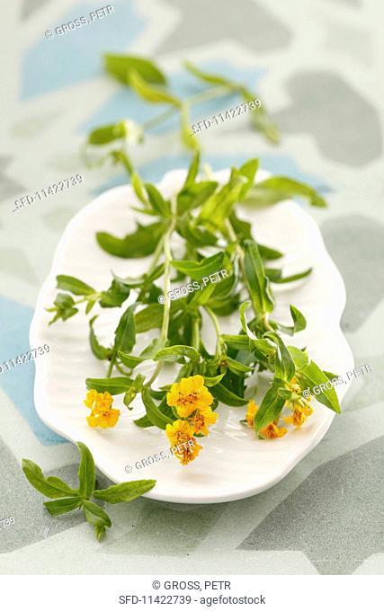 Marigolds on a porcelain platter