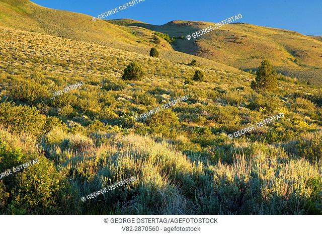 Sage grassland along Barnhardy Road, Hart Mountain National Antelope Refuge, Oregon