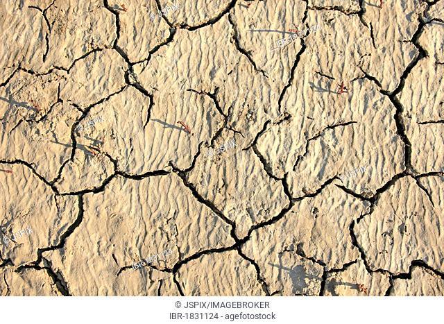 Parched soil surface, Saintes-Marie-de-la-Mer, Bouches du Rhone, Camargue, France, Europe