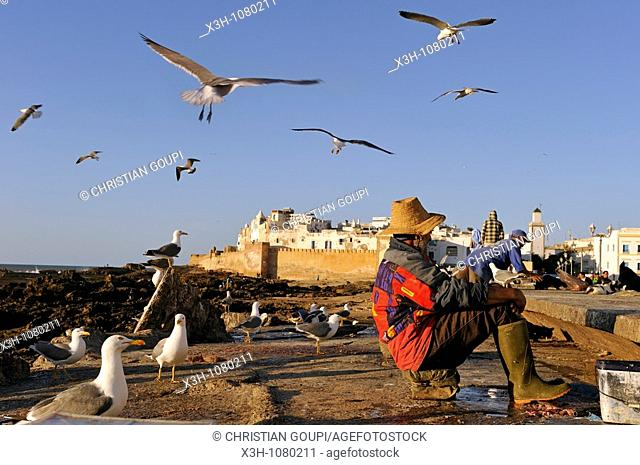 the Medina seen from sea wall on the way to the harbour, Essaouira, Morocco, North Africa