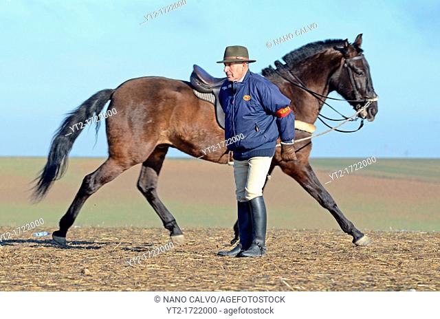 Mature man warms his horse during Finals of the Spanish National Championships of Hare Coursing, in Madrigal de las Altas Torres, Avila, Spain