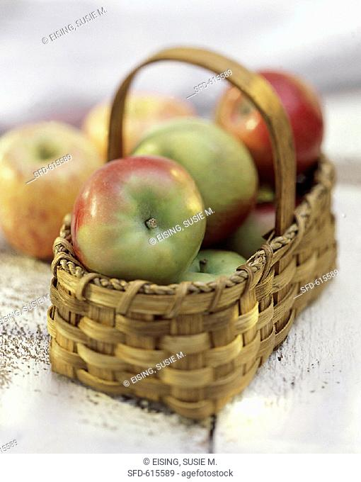 A Basket of Fresh McIntosh Apples