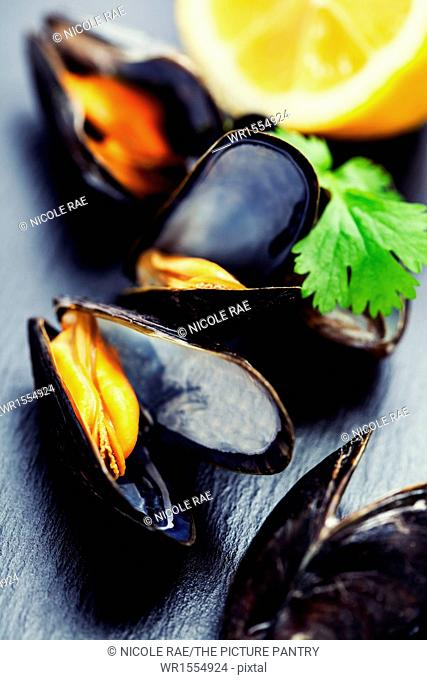 group of boiled mussels in shells
