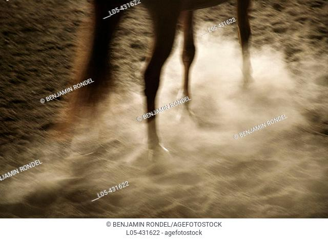 A horse trotting in an inside riding arena, Canada