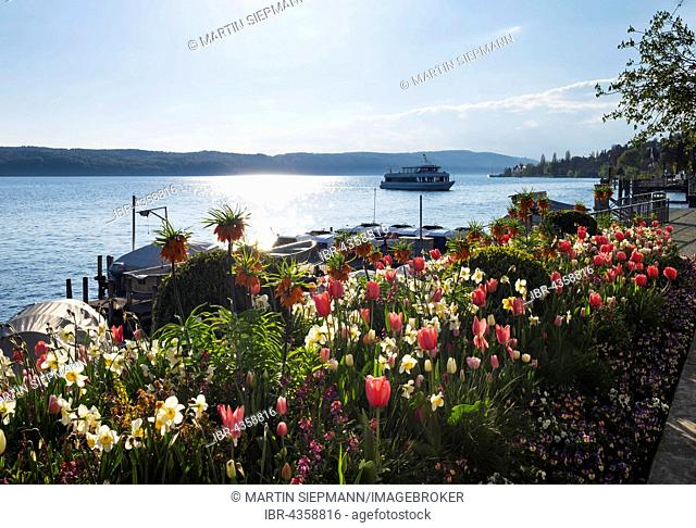 Flower beds with spring flowers at lakeside at jetty, Überlingen Lake Constance, Lake Constance district, Swabia, Baden-Württemberg, Germany