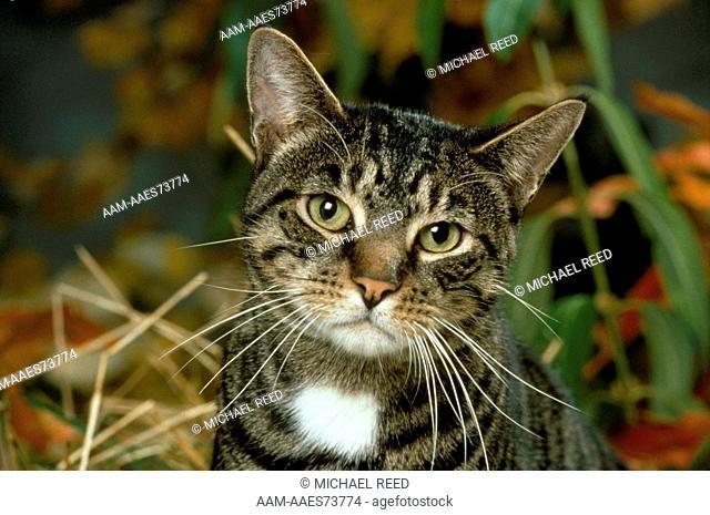 Zenia, Male Cat