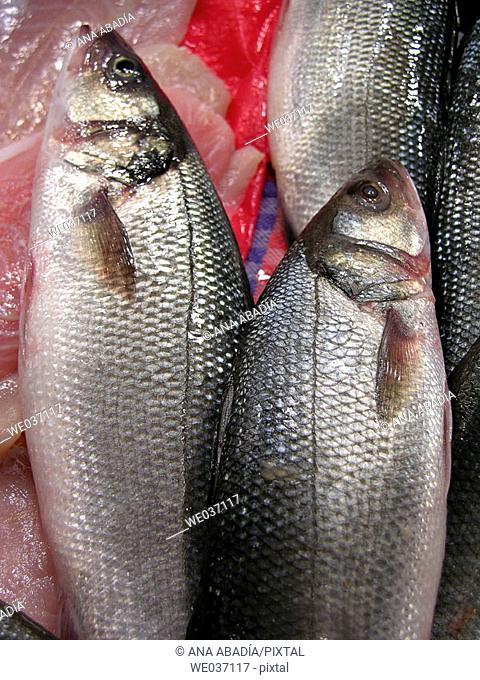 Sea bass for sale at market. El Olivar, Palma de Mallorca. Majorca, Balearic Islands, Spain