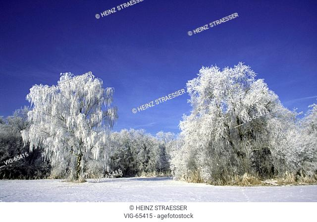 Landscape in wintertime under blue sky and trees covered with hoar frost. - GERMANY, 08/01/2002