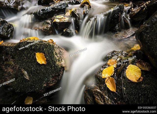 rio de Crlac, bosque de Carlac, - hayedo de Carlac-, Bausen, valle de Aran, cordillera de los Pirineos, Spain, europe