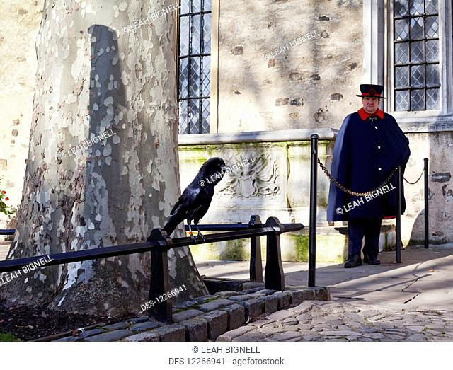 A Yeoman Warder and a guardian raven keep watch at the Tower of London; London, England