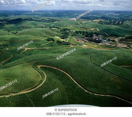 Sugar Cane Plantations Pernambuco Brazil