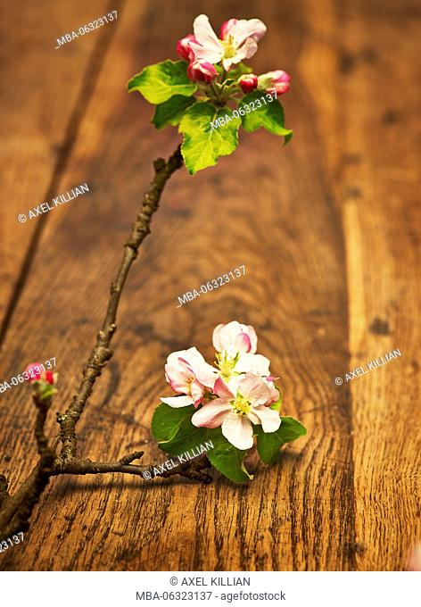 Apple branch and flowers on brown wooden table, rustic