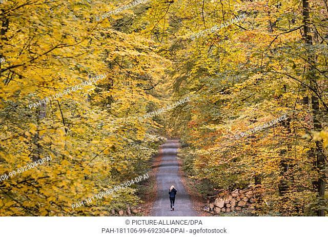 06 November 2018, Hessen, Friedrichsdorf: A woman is jogging through the autumn-coloured deciduous forest at the edge of Friedrichsdorf