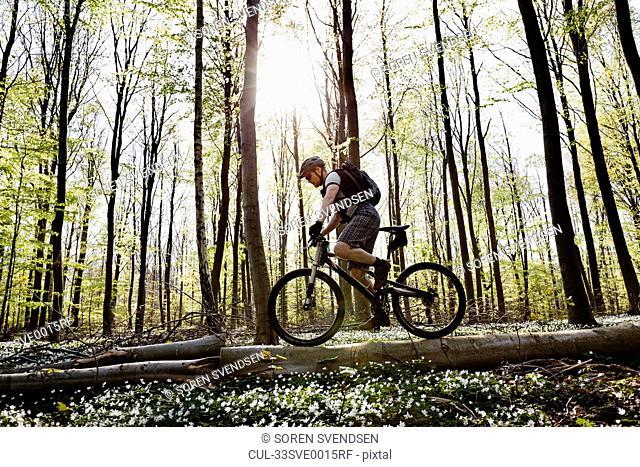 Mountain biker on fallen tree