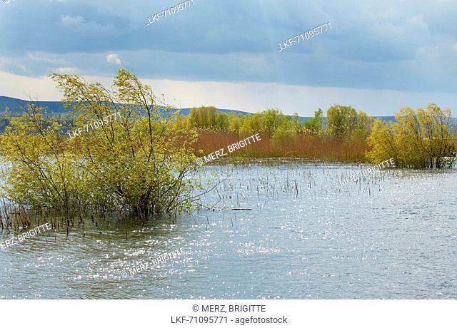 Biosphere reserve Danube Delta at Tulcea , Tulcea branch of the Danube , Romania , Europe