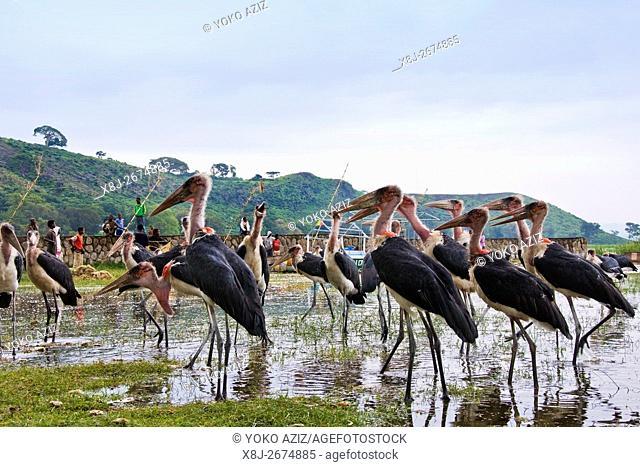 Birds, Fish market, Awasa, Ethiopia