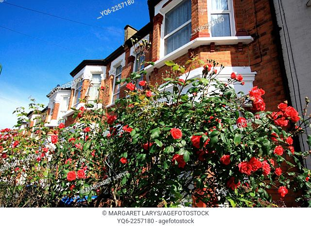 Beautiful London houses with red roses