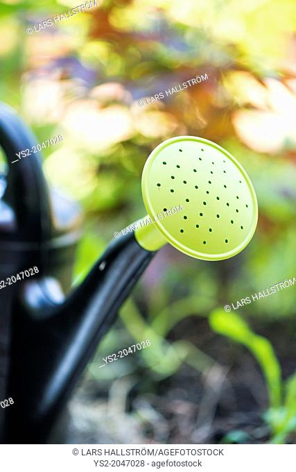 Closeup of plastic watering can in garden at summer