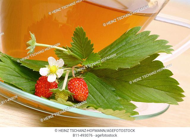 Wild Strawberry (Fragaria vesca) infusion