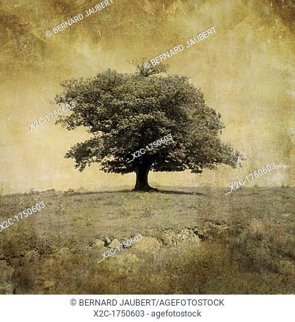 Tree, textured