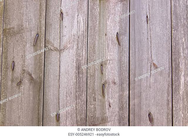 texture, tree, board