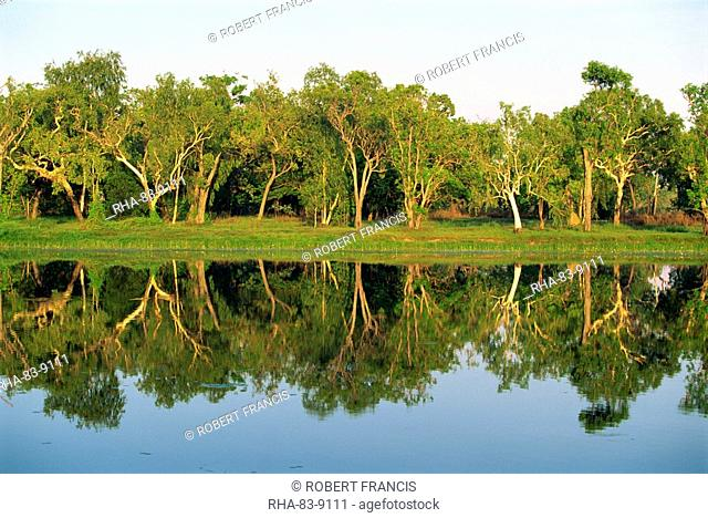 Reflections of eucalyptus gum trees on Annaburroo Billabong near the Arnhem Highway at the Mary River Crossing in the Northern Territory, Australia, Pacific
