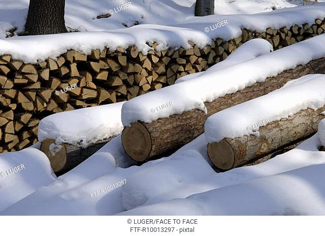 Spalted wood in a snow covered forest, Austria, Niederoesterreich