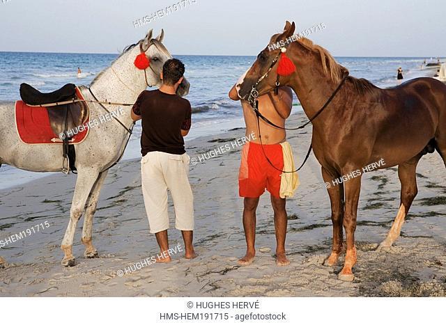Tunisia, Djerba, beach of Sidi-Mehres, horses