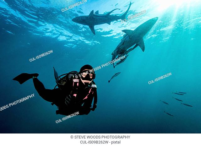 Diver surrounded by Oceanic Blacktip Sharks (Carcharhinus Limbatus) near surface of ocean, Aliwal Shoal, South Africa