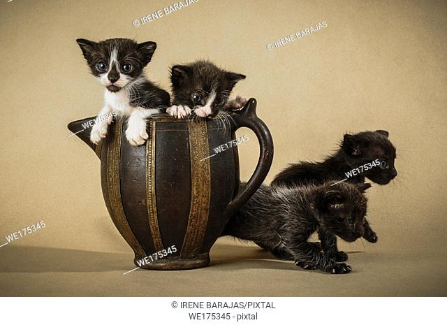 Family of kittens inside a pitcher