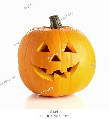 Jack o lantern (Cucurbita pepo) pumpkin with a carved face for Halloween, studio shot