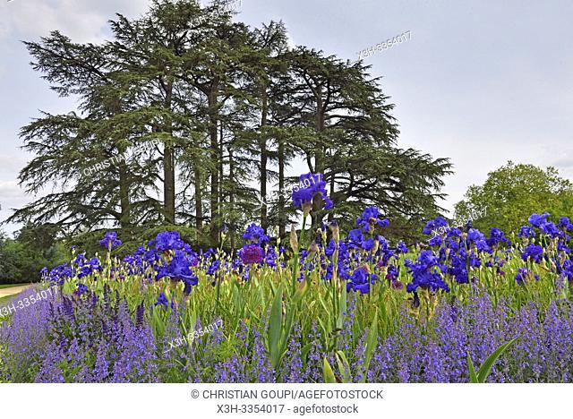 """""""""""""""""""""""La Promenade des Iris Bleus"""""""", Pres du Goualoup, Domaine de Chaumont-sur-Loire, departement Loir-et-Cher, region Centre-Val de Loire, France"""