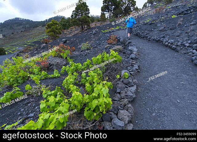 Teneguia Volcanoes Natural Monument, Fuencaliente municipality, La Palma island, Canary Islands, Spain, Europe, Unesco Biosphere Reserve