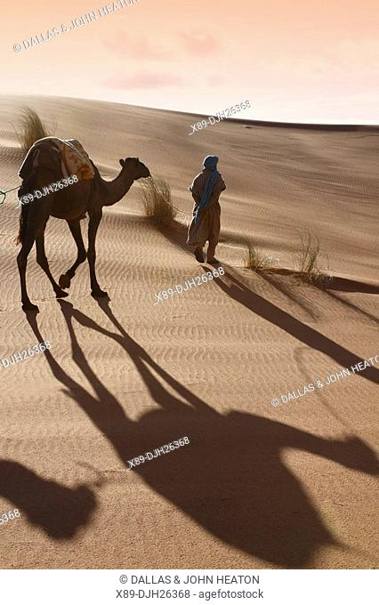 Africa, North Africa, Morocco, Sahara Desert, Merzouga, Erg Chebbi, Berber Tribesman Leading Camel