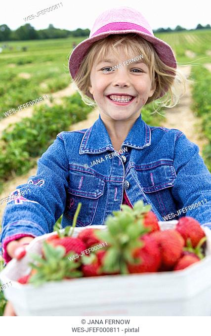 Portrait of happy little girl holding box of strawberries on a strawberry field