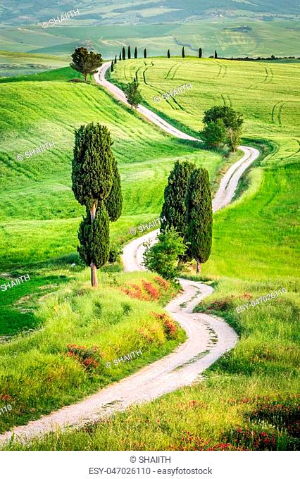 Dirt road and green field in Tuscany, Italy