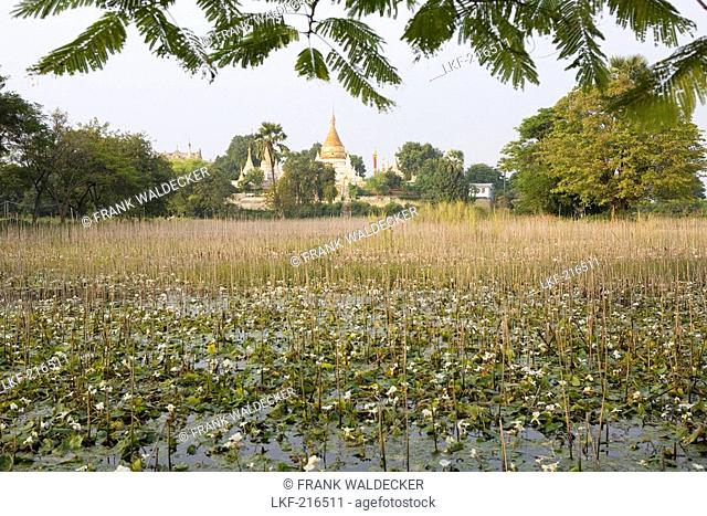 Pagoda on Inwa island  Ava  at Ayeyarwady River near Amarapura, Myanmar, Burma