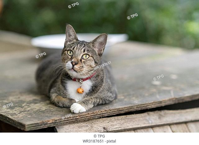 portrait; Cat look up