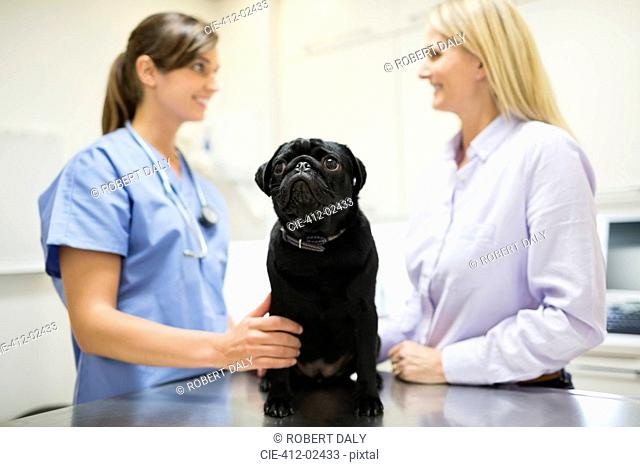 Veterinarian and owner discussing dog in vet's surgery