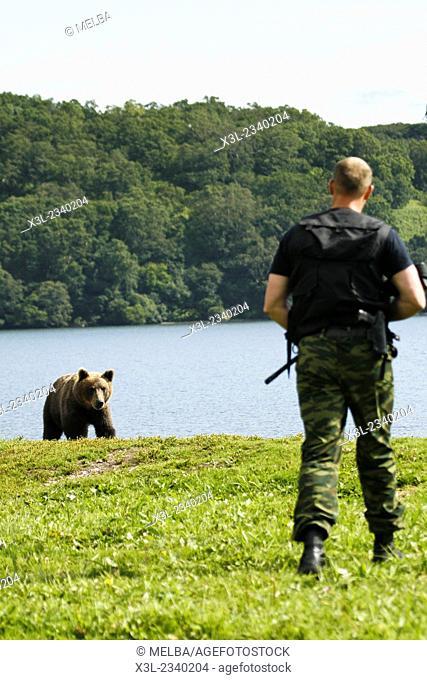 Brown Bear (Ursus arctos) and ranger in Kurile Lake, Kamchatka Peninsula, Russia