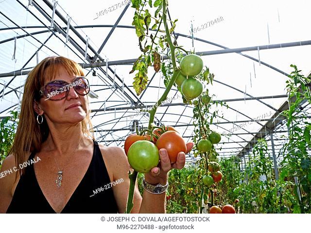 Woman holding hothouse tomatoes, San Louis Obispo, California, USA