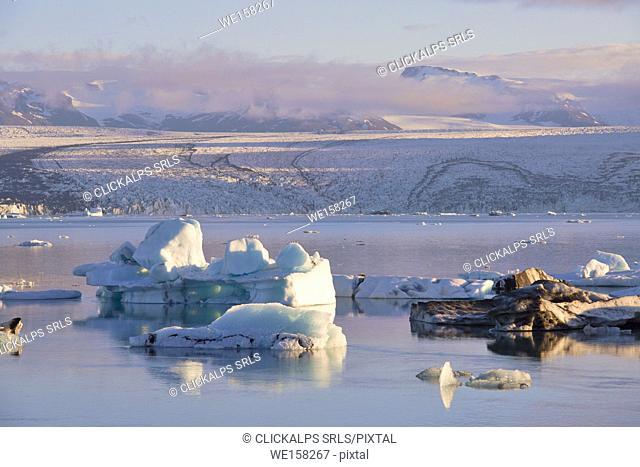 Icebergs in Jokulsarlon Glacier Lagoon during a sunrise, Austurland, Eastern Iceland, Iceland