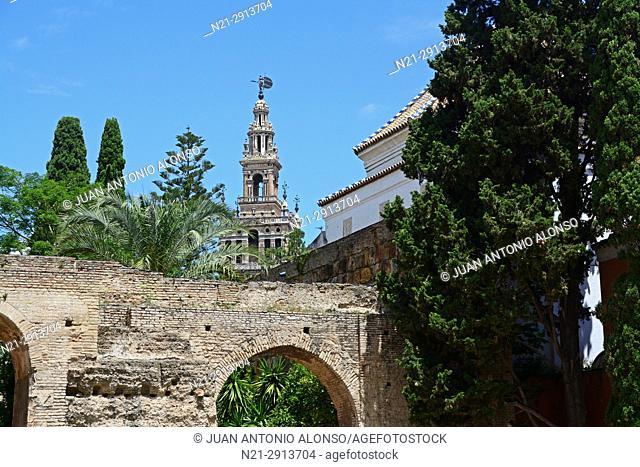 La Giralda as seen from the Patio de la Monteria. Real Alcazar. Seville, Andalucia, Spain, Europe. Keywords:
