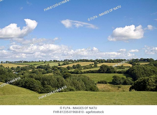 View of farmland with pasture, hedgerows and trees, Chard, Somerset, England, july