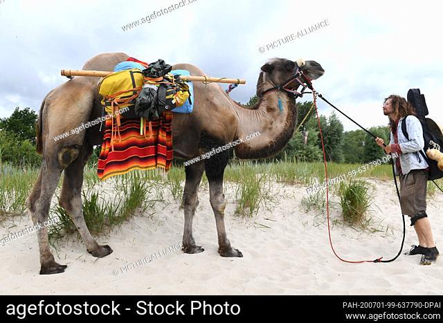 01 July 2020, Mecklenburg-Western Pomerania, Ueckermünde: Sebastien Arz walks through Ueckermünde with a camel. A man, a woman